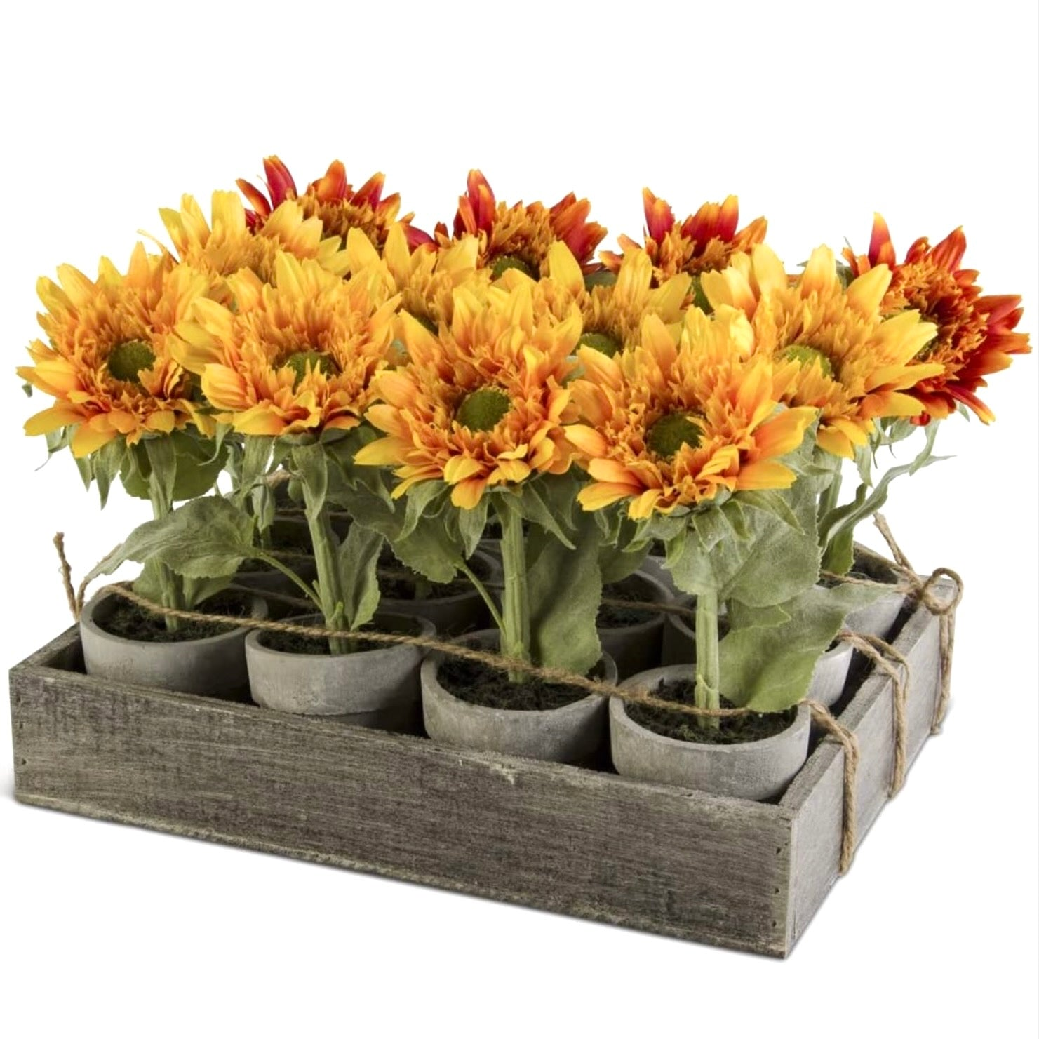 Assorted potted Sunflowers | Putti Fine Furnishings