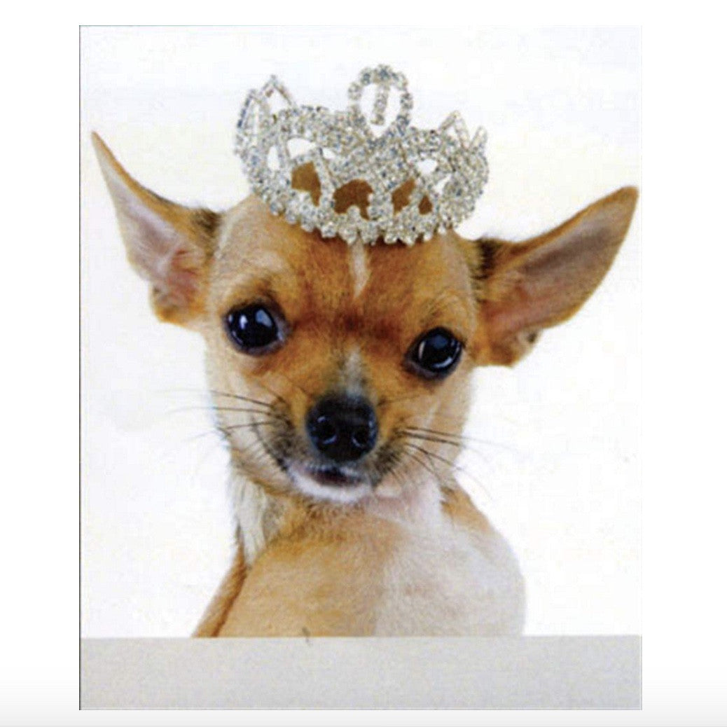 Chihuahua Greeting Card, Paper E Clips, Putti Fine Furnishings