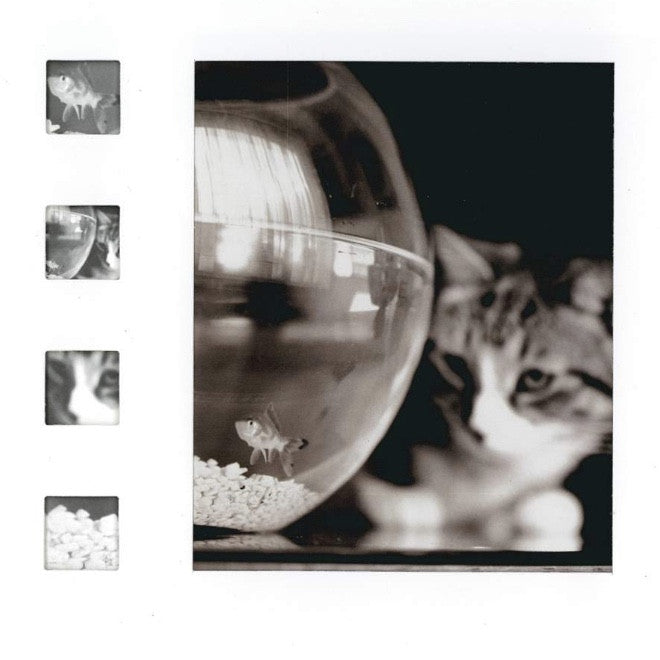 Cat and Fish Bowl  Greeting Card, JE-Jannex Enterprises, Putti Fine Furnishings