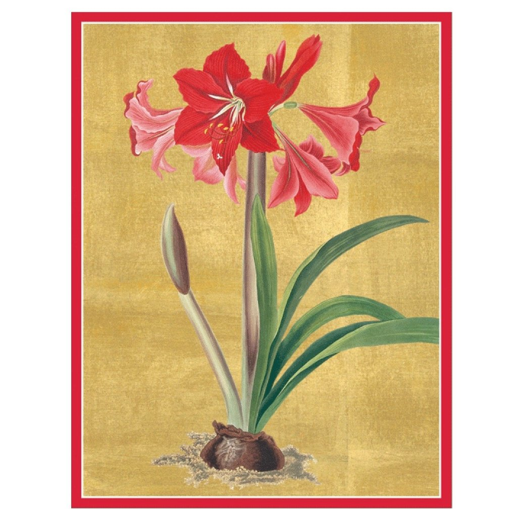 Caspari Red Amaryllis Boxed Christmas Card | Putti Christmas