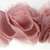 Miss Rose Sister Violet Small Ruffle Dusty Rose Braid