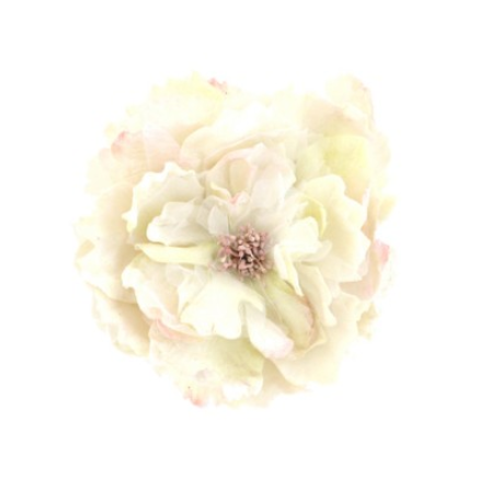 Miss Rose Sister Violet Cabbage Rose - Cream