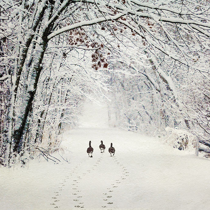 """Ducks in the Snow"" Christmas Card, ID-Incognito Distribution, Putti Fine Furnishings"