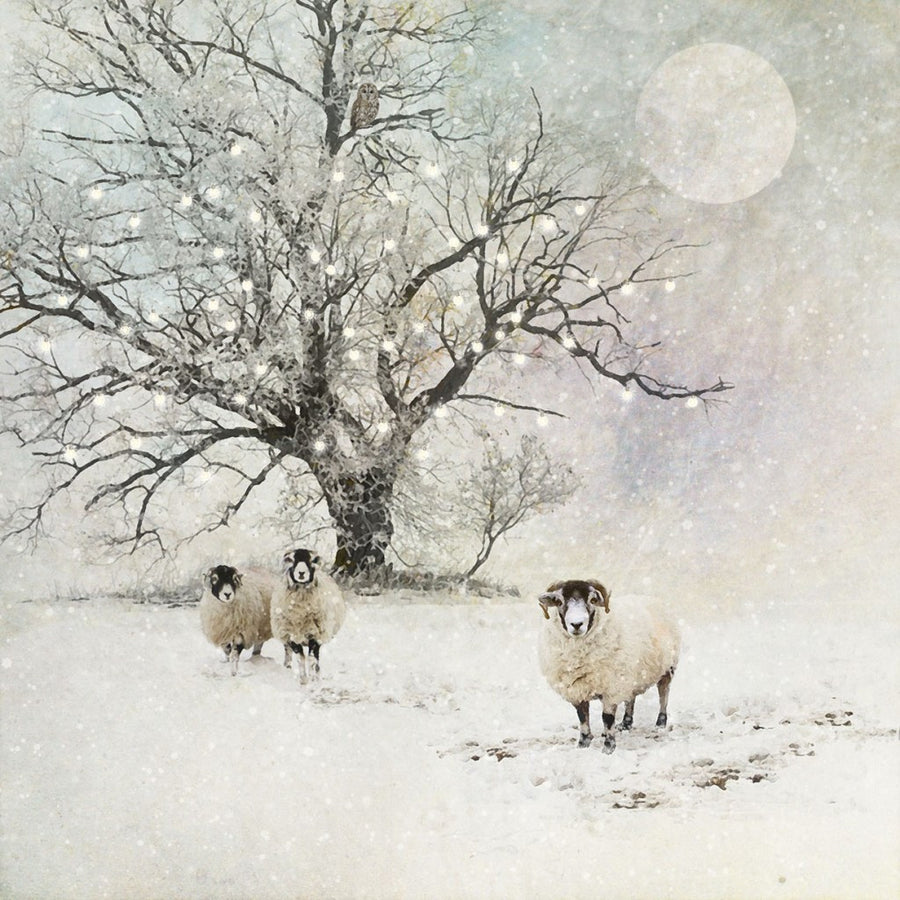 """Sheep in the Snow"" Christmas Card, ID-Incognito Distribution, Putti Fine Furnishings"