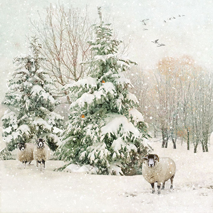 """Fir Tree with Sheep"" Christmas Card, ID-Incognito Distribution, Putti Fine Furnishings"