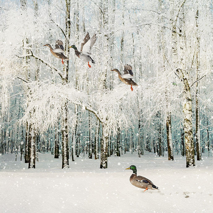 """Flying Ducks"" Christmas Card, ID-Incognito Distribution, Putti Fine Furnishings"