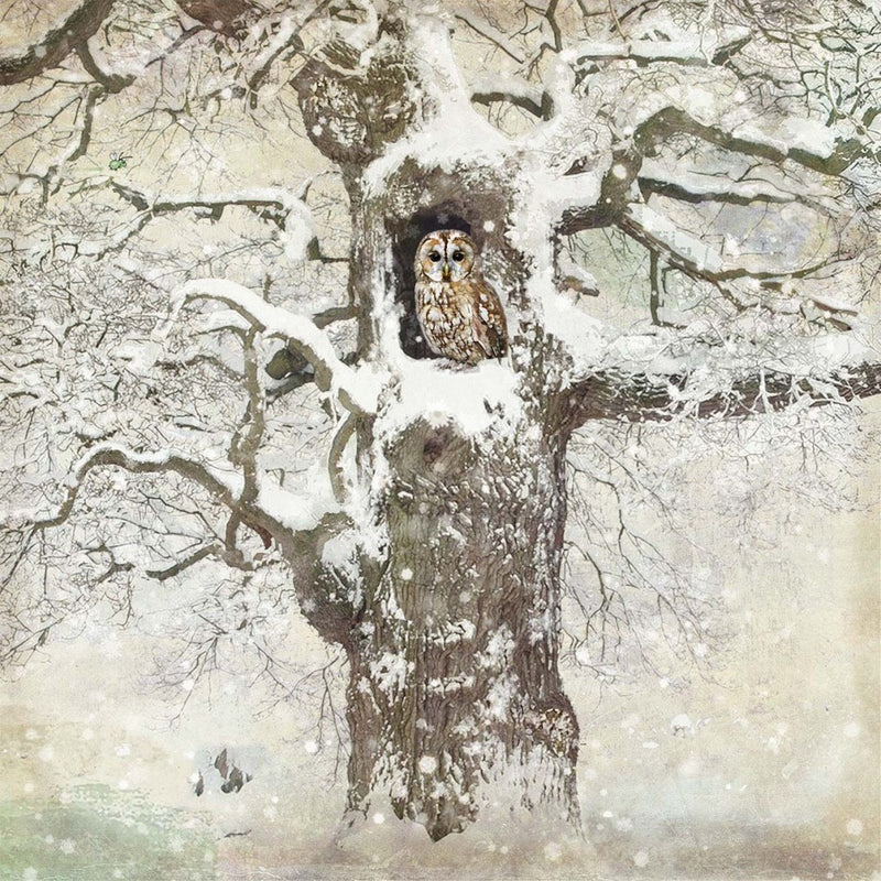 """Tree Owl"" Christmas Card, ID-Incognito Distribution, Putti Fine Furnishings"