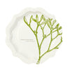 Botanical Christmas Paper Plates, TT-Talking Tables, Putti Fine Furnishings