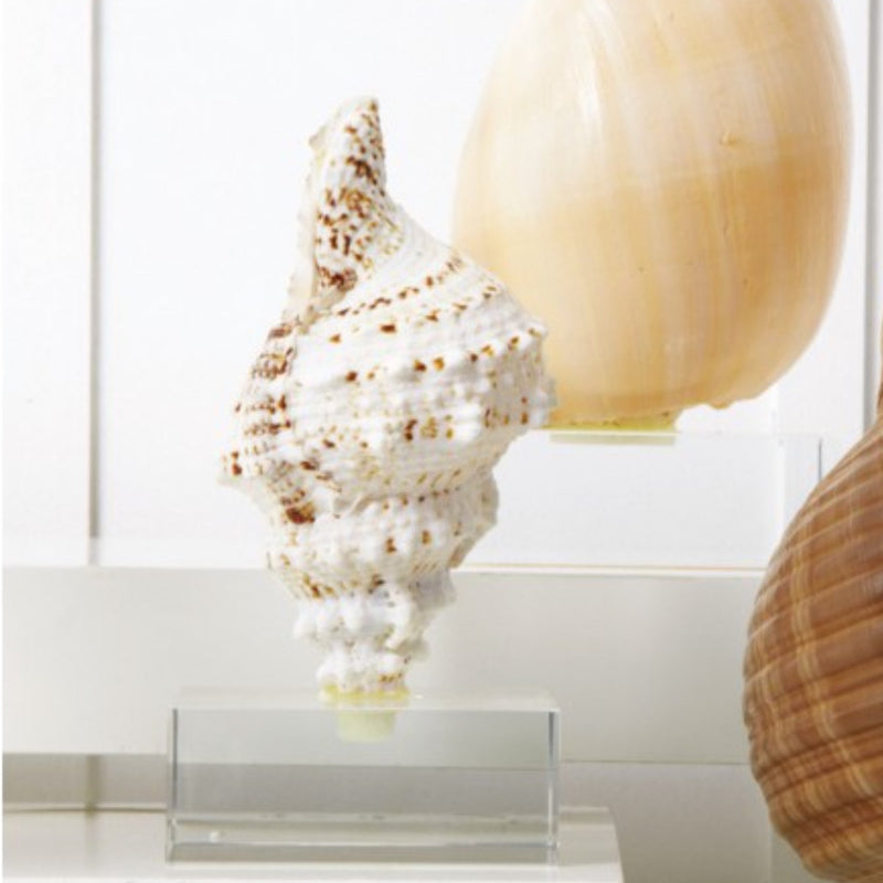 Large Shell on Stand-Accessories-TC-Two's Company-Putti Fine Furnishings