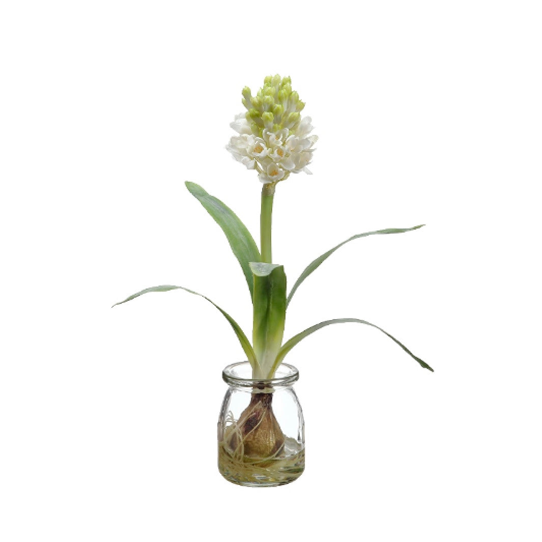 White Hyacinth Bulb in Glass Vase | Putti Fine Furnishings