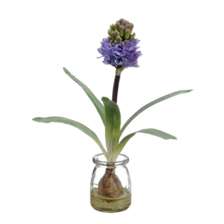 Purple Hyacinth Bulb in Glass Vase | Putti Fine Furnishings