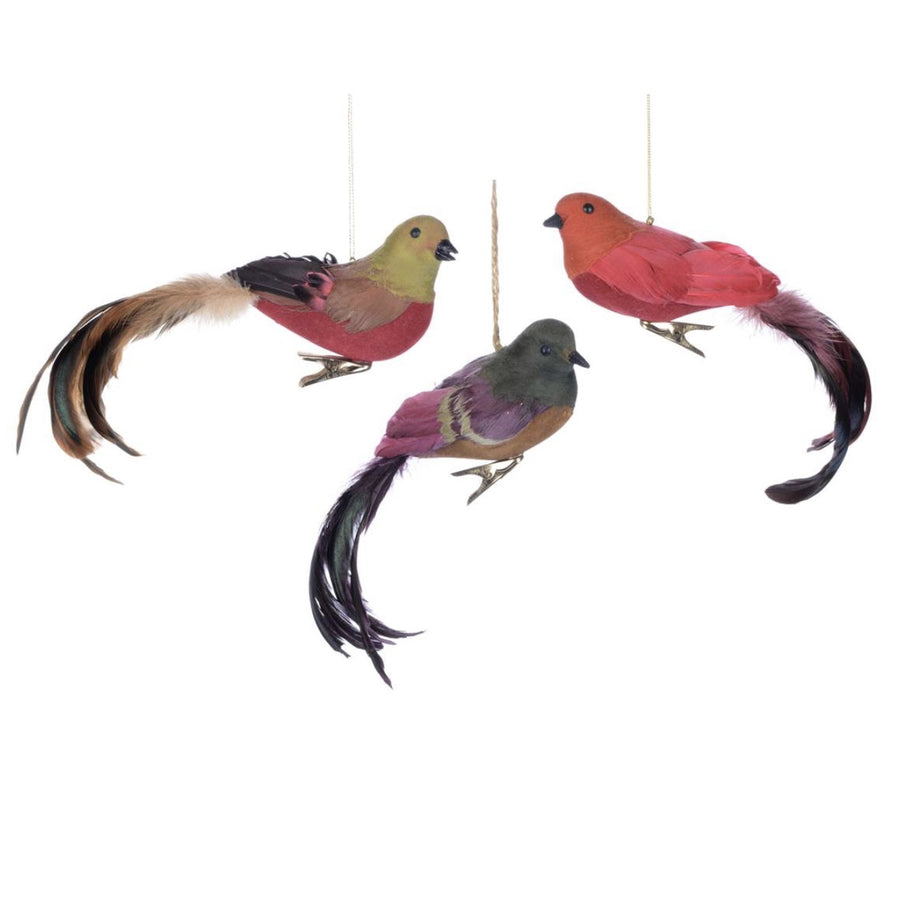 Multi Colour Feather Birds
