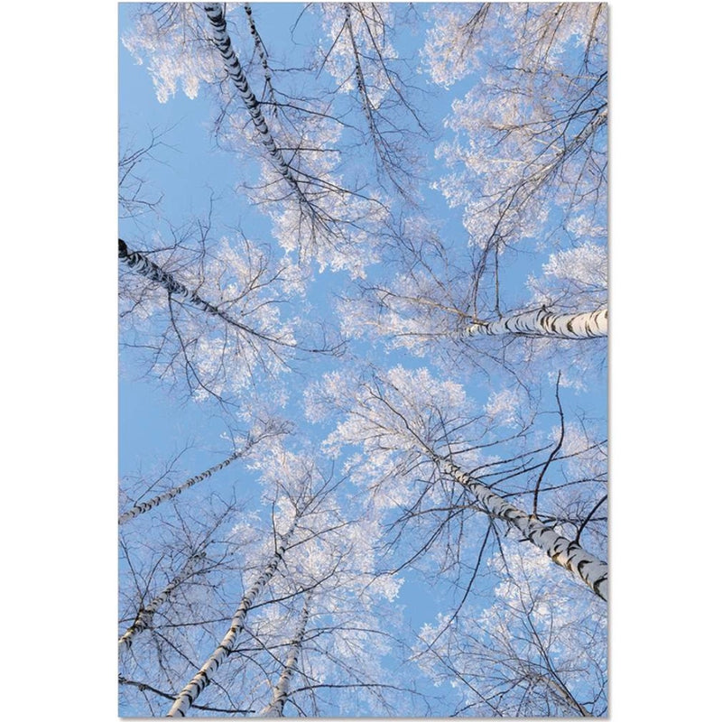 Tree Tops Winter Seasonal Card