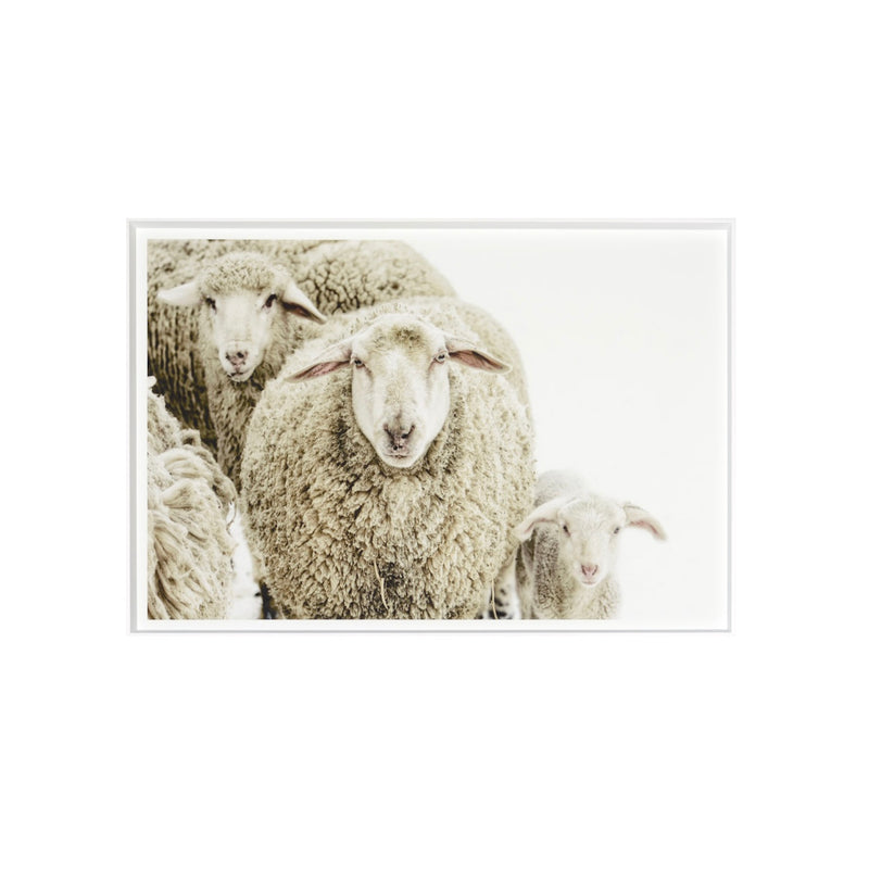 """Wooly Stare"" Framed Print"