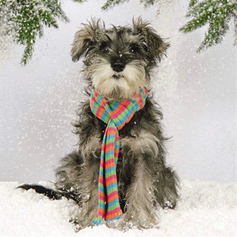 """Puppy in Scarf"" Christmas Cards - Pack Notes, JE-Jannex Enterprises, Putti Fine Furnishings"