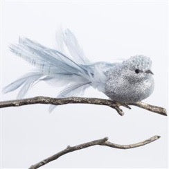 Silver Feather Tail Bird