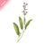 Tattly Temporary Tattoos - Scented Sage