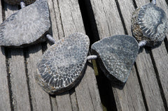 (SPL00002) Fossilised Bryozoan Coral natural slices