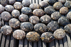 Turritella agate 21-25mm oval beads (ETB00340)