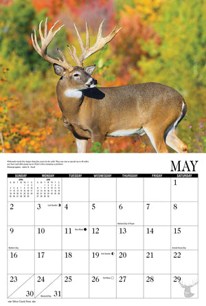 2021 Whitetail Deer Calendar