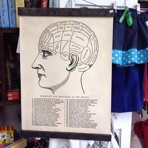 Pull Down Chart - Vintage Phrenology Diagram