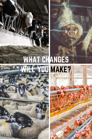What changes will you make? controversial mages of farm animals