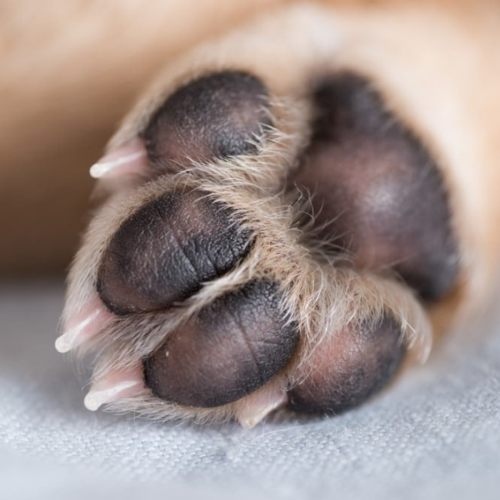 5 Tips to Keep Your Pets Paws in Good Condition