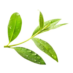 Tea tree for perfect skin