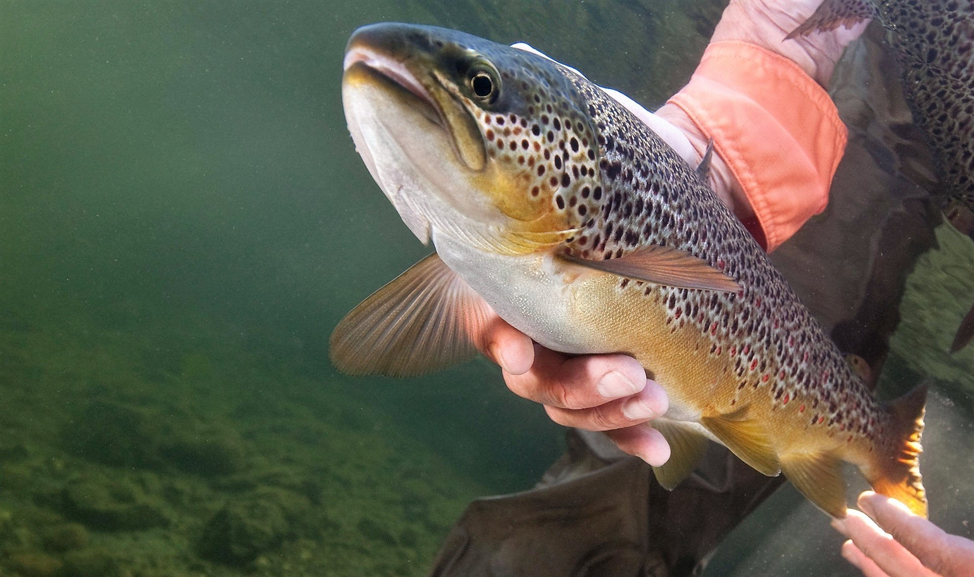 Spey Casting & Fly Fishing lessons