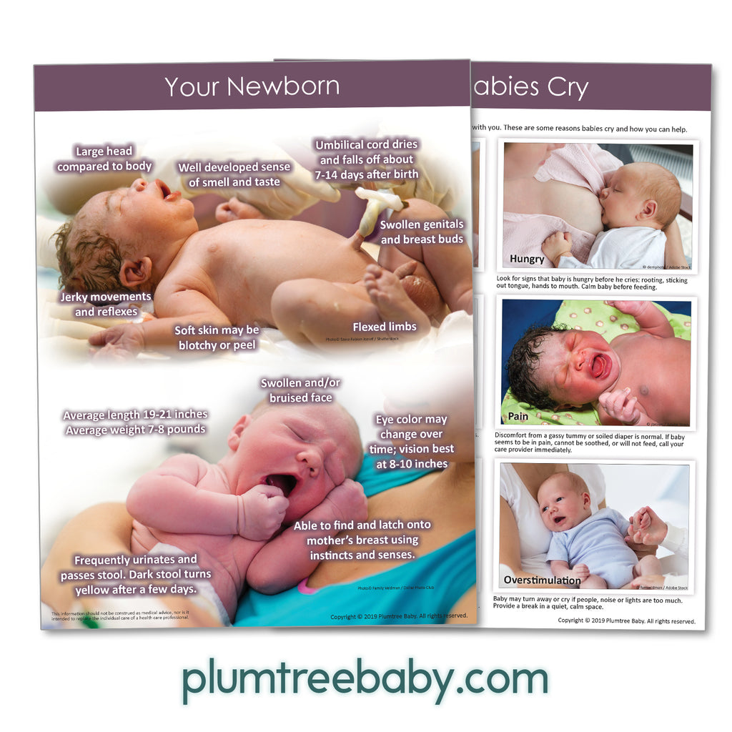 Your Newborn Handouts-Handout-Plumtree Baby