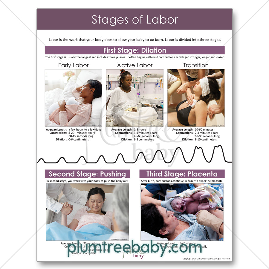 Labor and Birth Handouts-Handout-Plumtree Baby