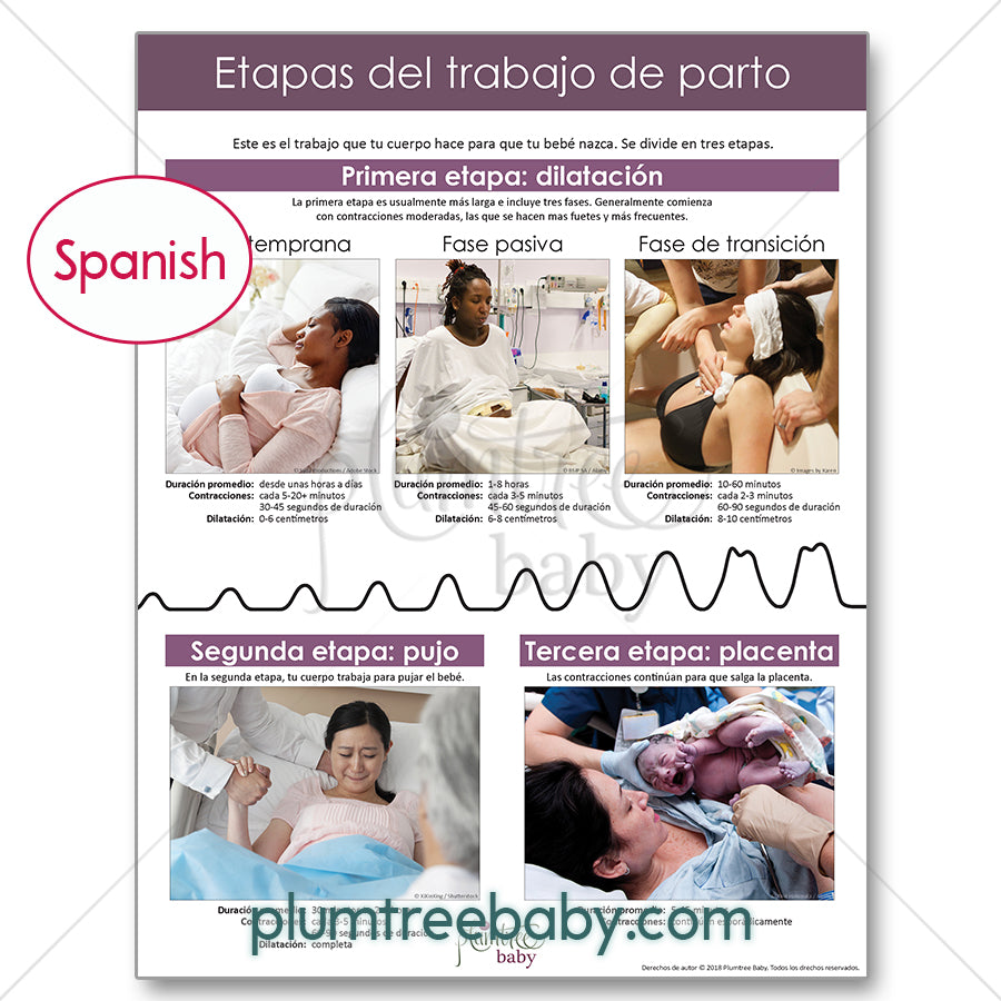 Labor and Birth Handouts - Pack of 50-Handout-Plumtree Baby