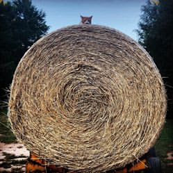 Hay Bale Donation