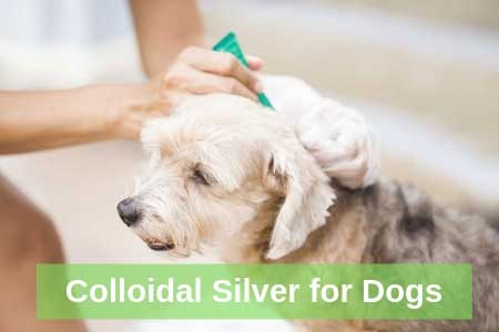 Five Immune-Boosting Uses of Colloidal Silver