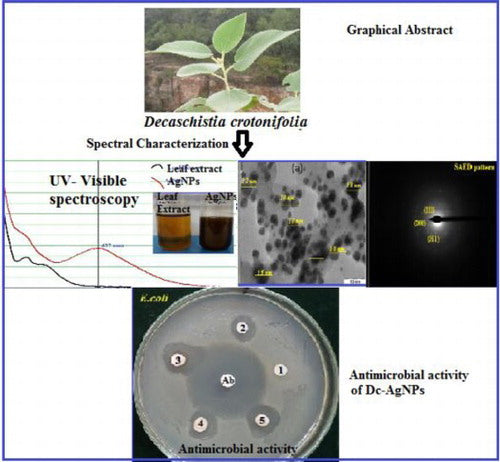 Biosynthesis of silver nanoparticles using leaf extract of Decaschistia crotonifolia