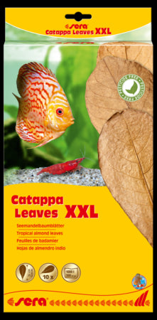 Catappa Leaves - Corals Fish and Beyond