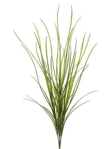 "Tideline 42"" Tall Wild Grass Bush Green"