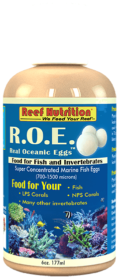 Real Ocean Eggs - Corals Fish and Beyond