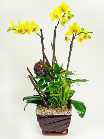 [OPA-02] Yellow Orchid Plant