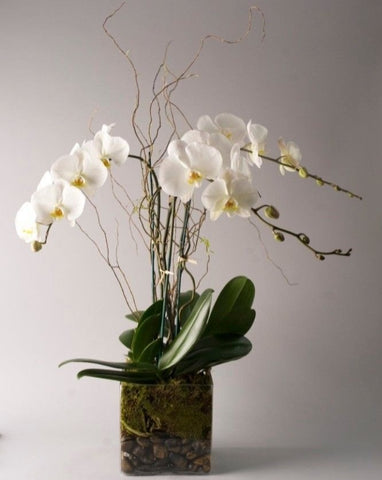 Whispering Orchids
