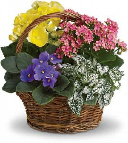 Spring Dream Basket