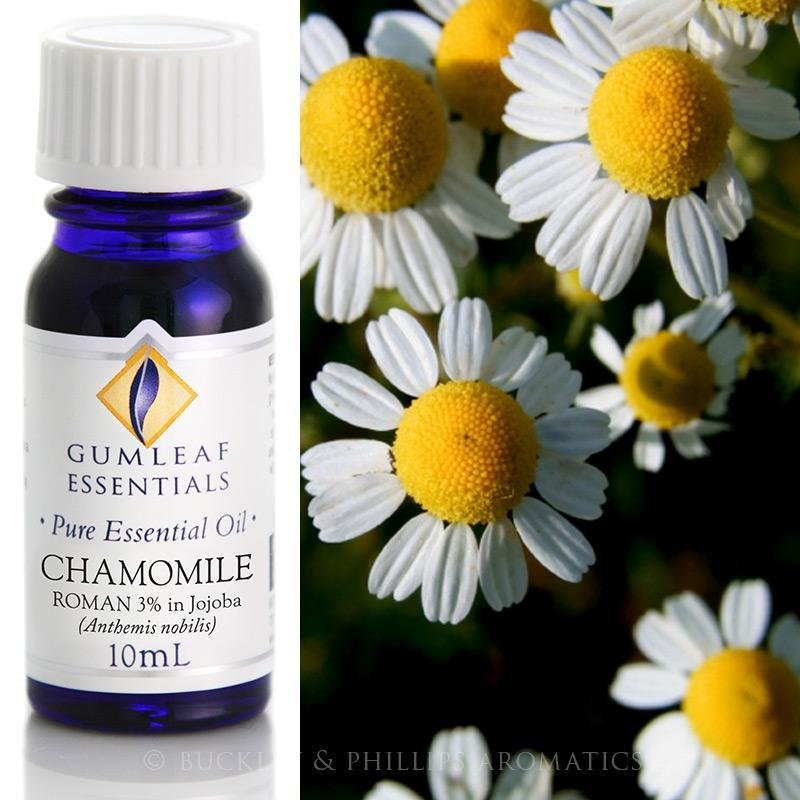 Buckley and Phillips Eucalyptus Blue Mallee Essential Oil 10ml