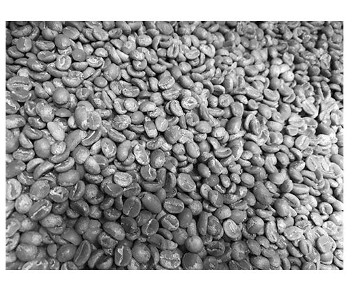 Unroasted Coffee || 250g