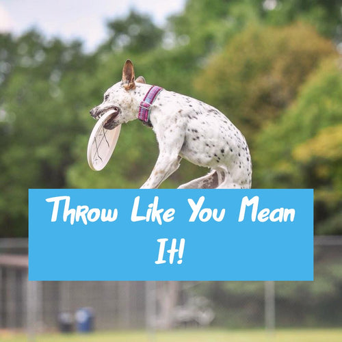 **Throw Like You Mean It** Online Disc Dog Course