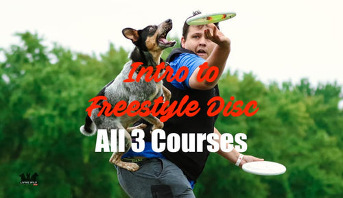 Intro to Freestyle Disc (All 3 Courses!)