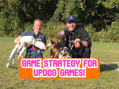 UpDog Game Strategy by Lucky Mutt Dog Training
