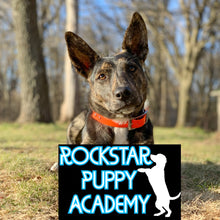 Load image into Gallery viewer, ROCKSTAR PUPPY ACADEMY