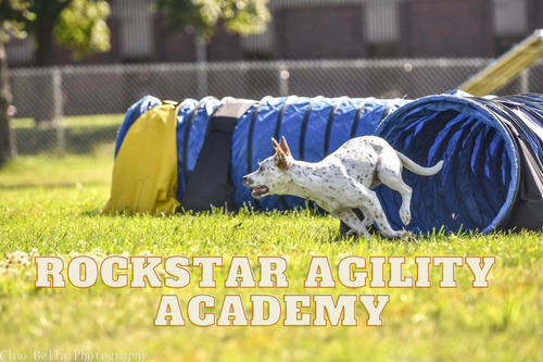 Rockstar Agility Academy: Beginners and Puppies