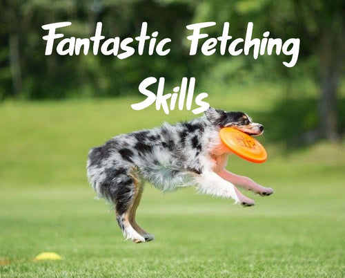 Fantastic Fetching Skills Online Course