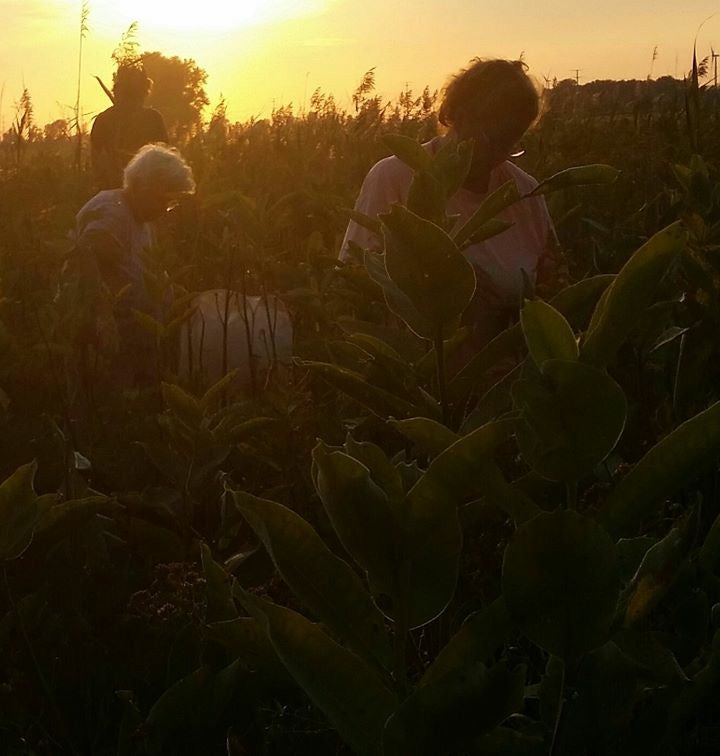 Multiple generations go pick milkweed to engage with nature, each other, and earn extra income.